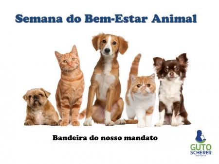 Semana do Bem-Estar animal: Guto Scherer protocola projeto de lei de microchipagem e estimula ações